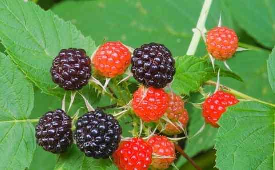 BEST Edible Perennials for the Lazy Gardener