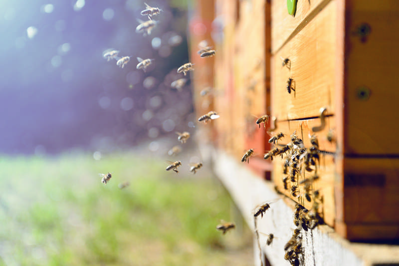Why I Keep Bees and Why Beekeeping is Important