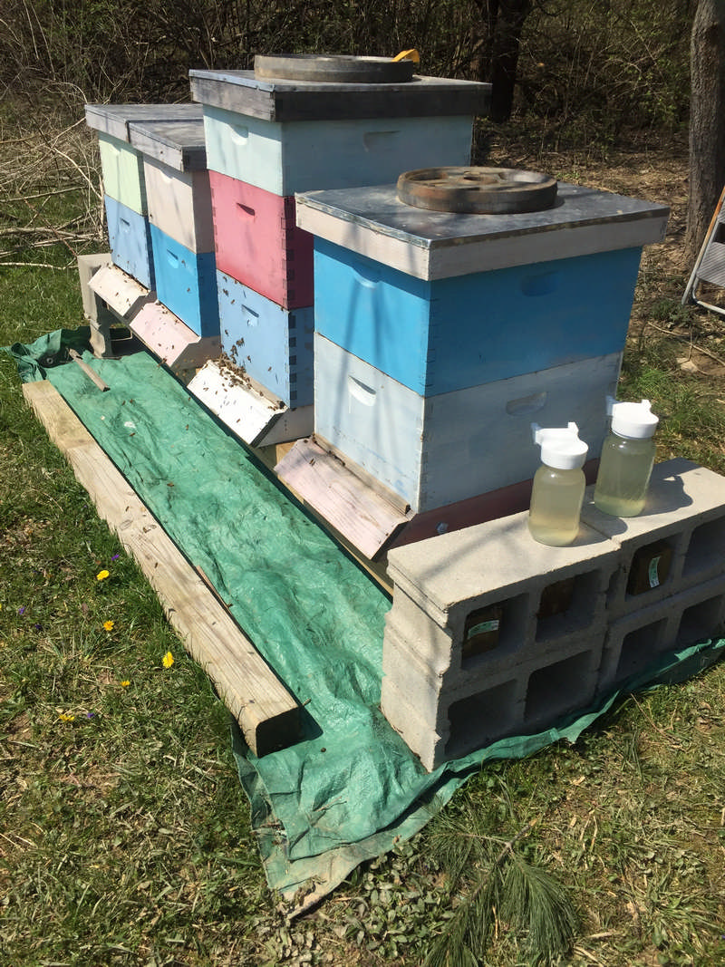 bee hives on a stand with tarp underneath