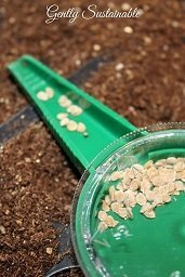 How to Start Seeds Indoors the Right Way