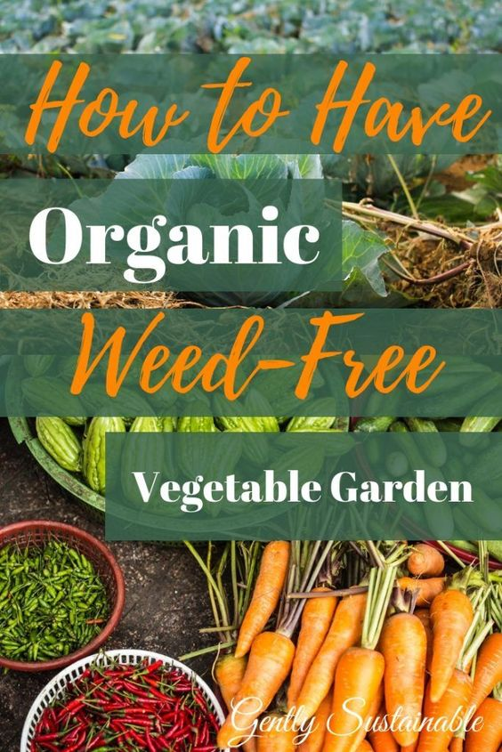 How to Have a Weed-Free Vegetable Garden