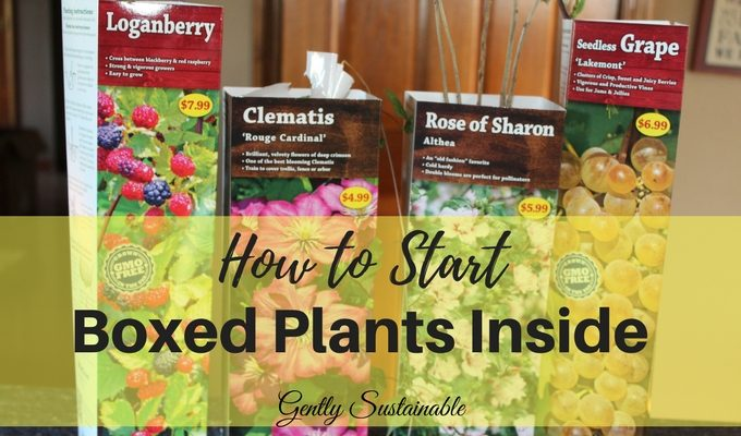 how to start boxed plants indoors