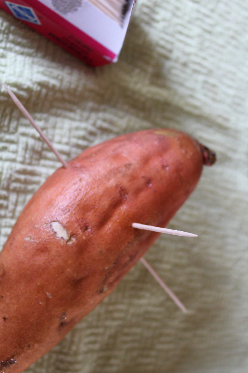 sweet potatoes with toothpicks