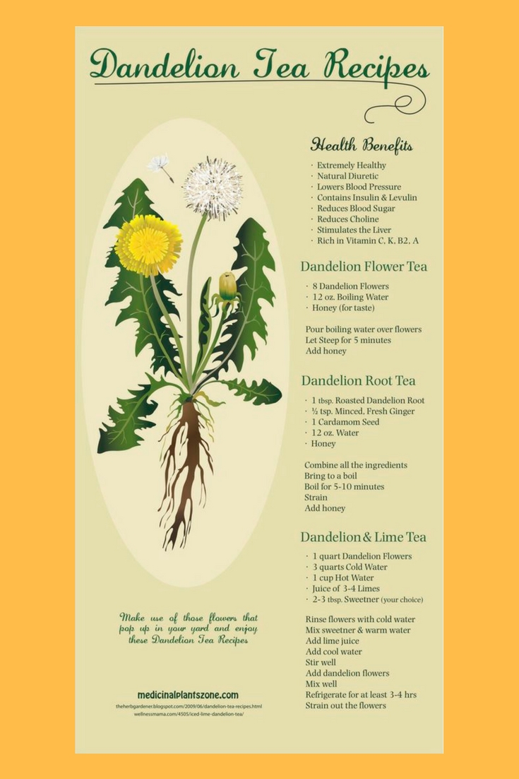 dandelion tea recipes