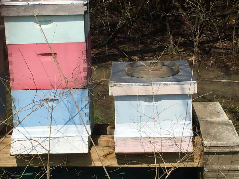 bee hives on stand