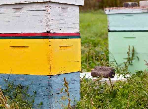 how to move a beehive