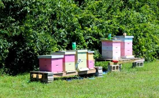 how to move a bee hive