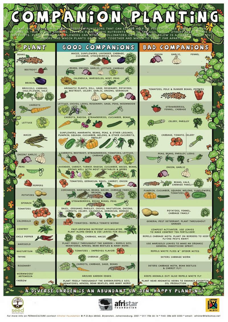compantion planting chart