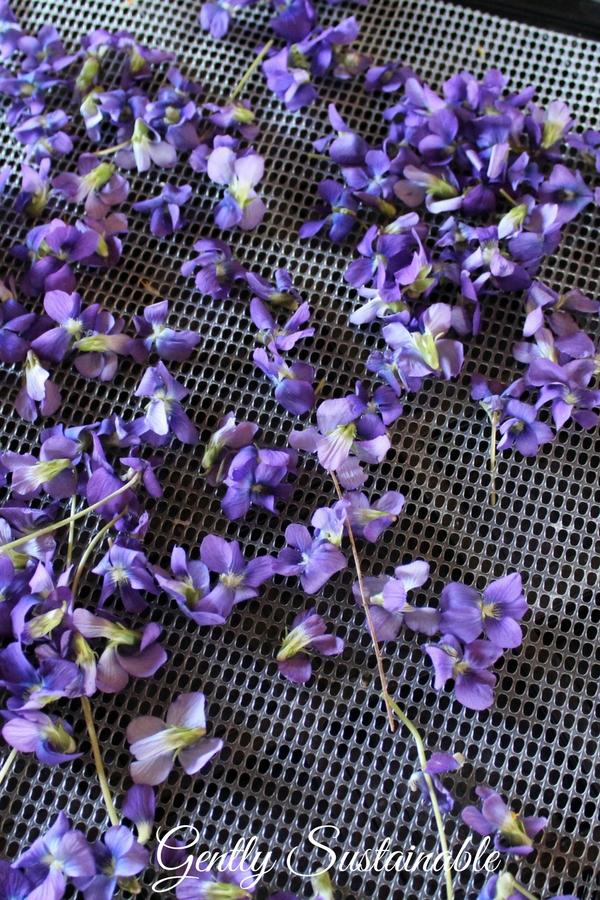 violets on a dehydrator tray