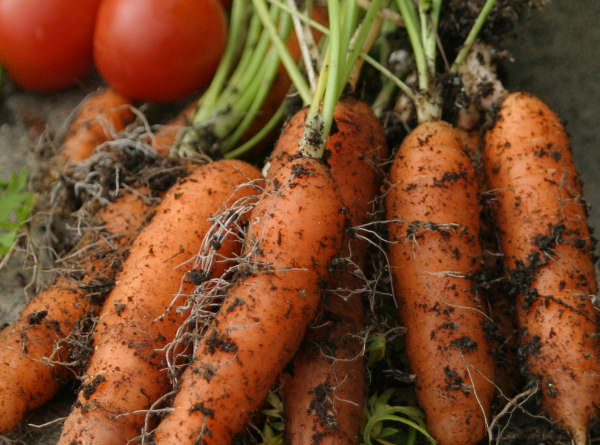 What is Companion Vegetable Planting?