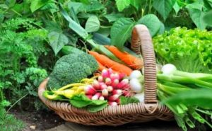 what is companion planting