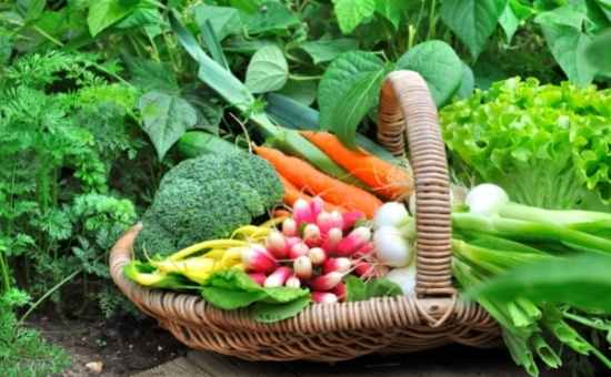 Read more about the article What is Companion Vegetable Planting?