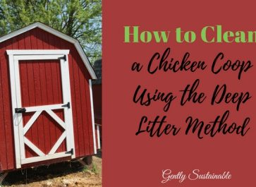 The Easy Way to Clean a Chicken Coop Using the Deep Litter Method