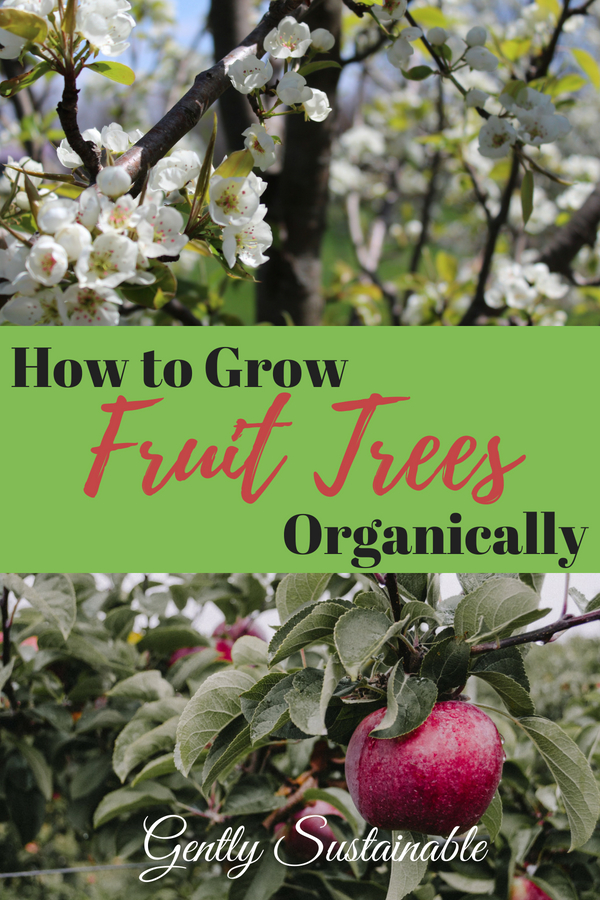 How to Grow Organic Fruit