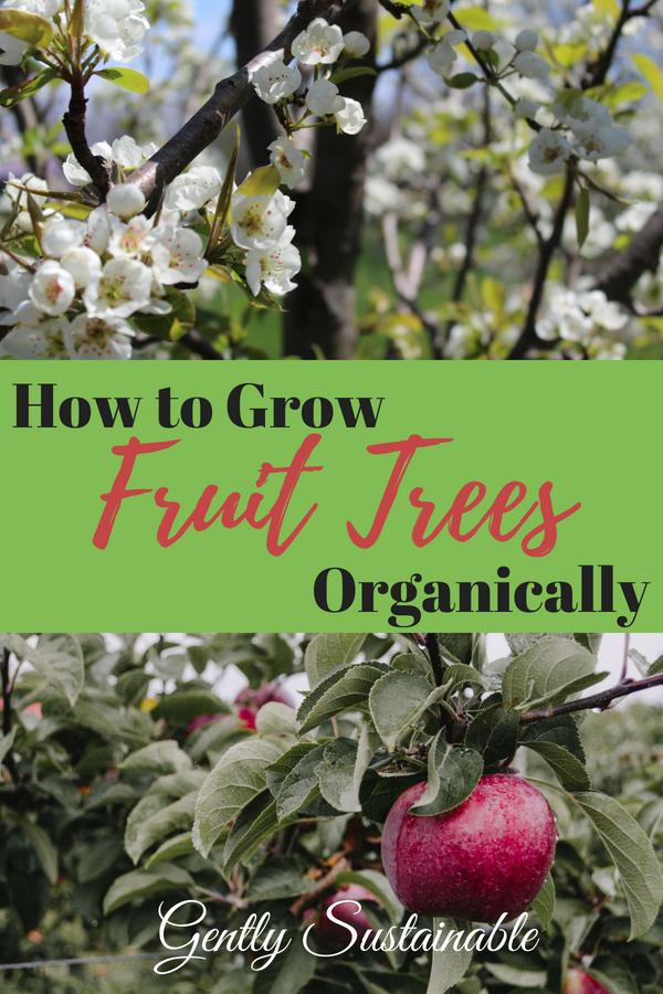 How to Grow Organic Fruit Trees