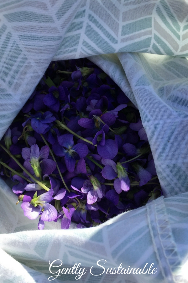 wild violets in a cloth bag