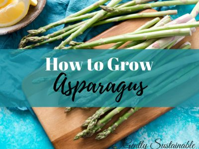 How to Grow and Harvest Asparagus