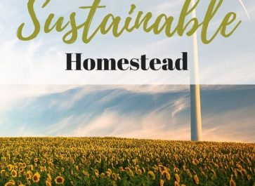 How to Start a Self-Sufficient Homestead