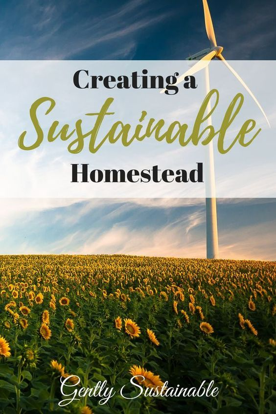 How to Create a Sustainable Homestead