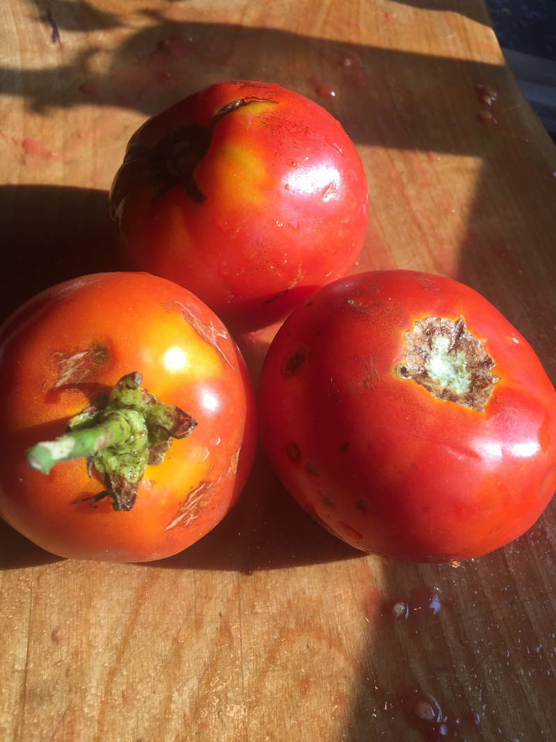 frresh tomatoes on a cutting board