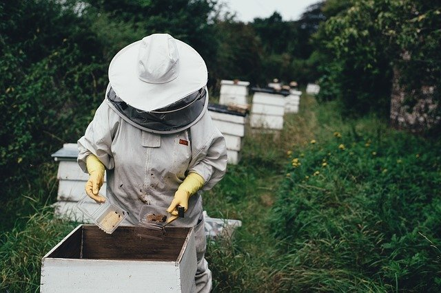 beekeeper in field with beehives