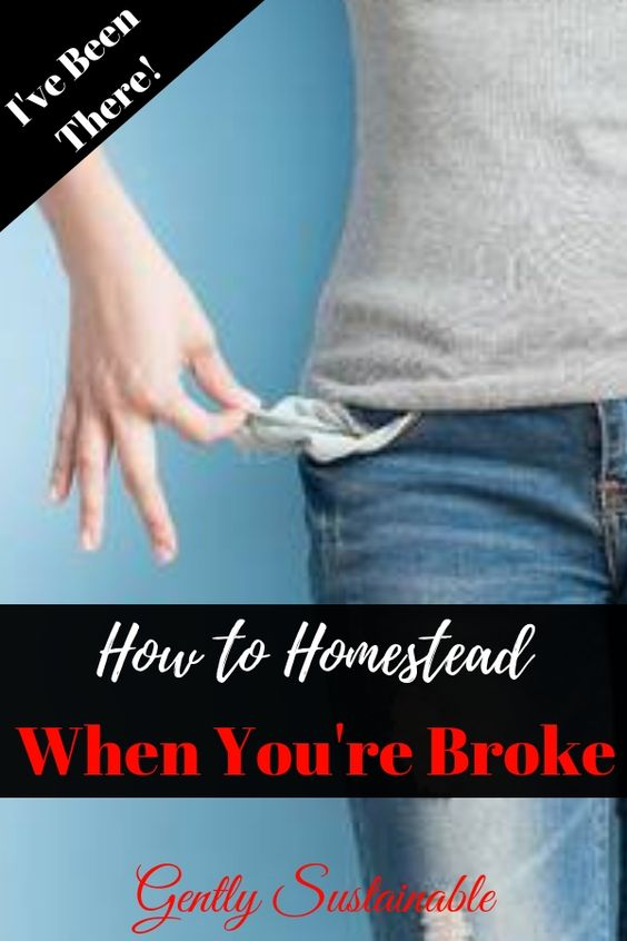How to Homestead with No Money