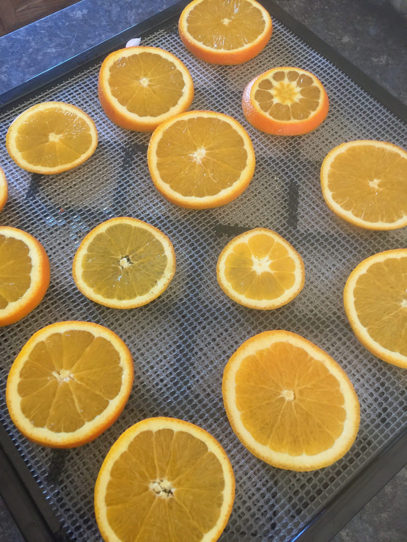orange slices on dehydrator sheet