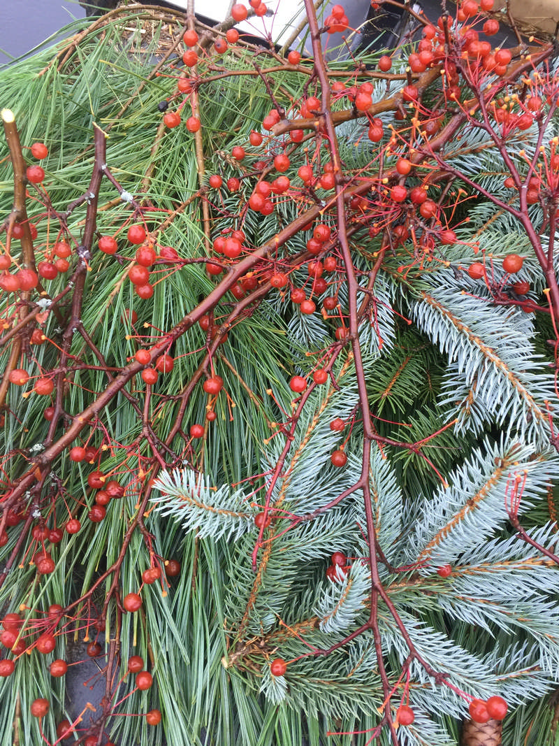 pine branches and berries