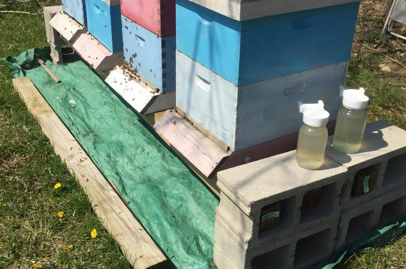 bee hives in summer