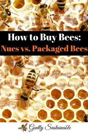 How Should You Buy Bees?  Nucleus Colony VS. Packaged Bees