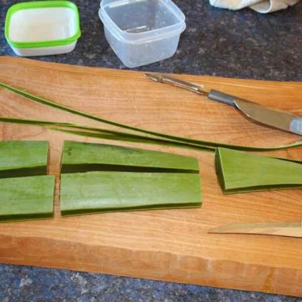 quartering of aloe vera leaf