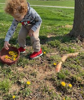 is dandelion safe to eat?