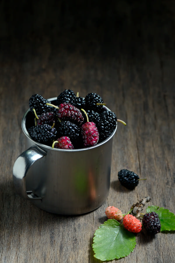 how to forage for and harvest mulberry