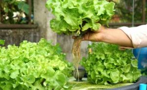 how to get started with aquaponics