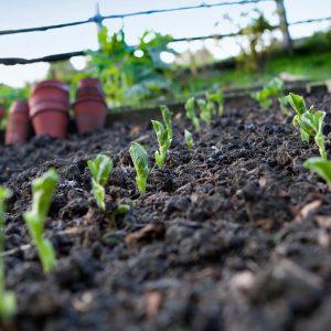 weed-free gardening