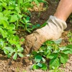 How to Prevent Weeds in a Vegetable Garden