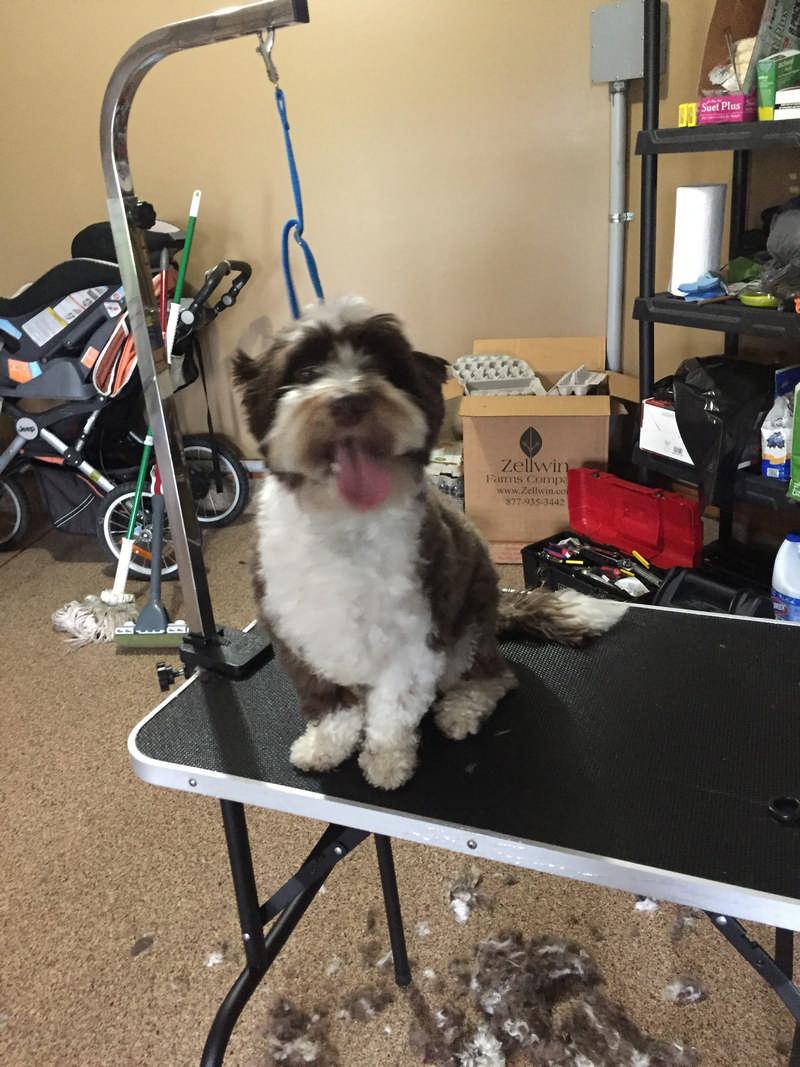 diy dog clipping