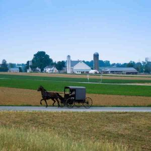 horse and buggy on road in from of farm