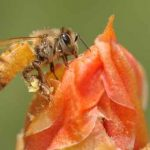 How to Attract Beneficial Bugs to the Garden