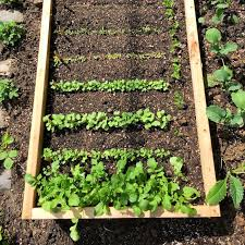 sustainable gardening in raised bed
