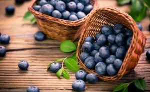 how to grow blueberries in your backyard