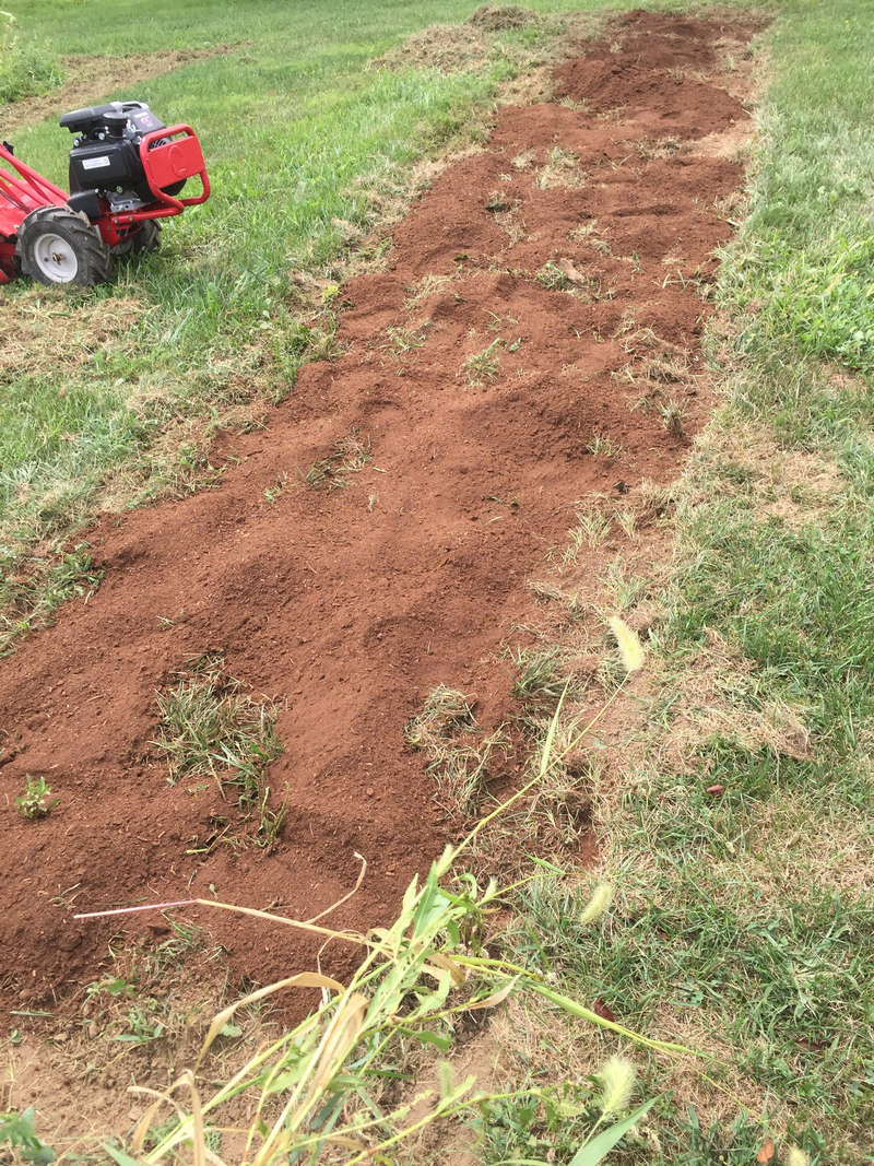 peat moss on blueberry patch