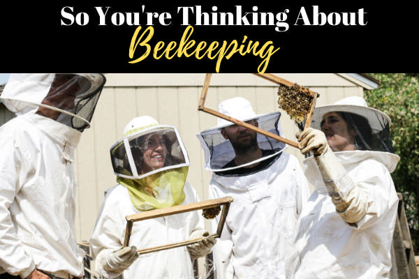 Keeping Bees for Beginners