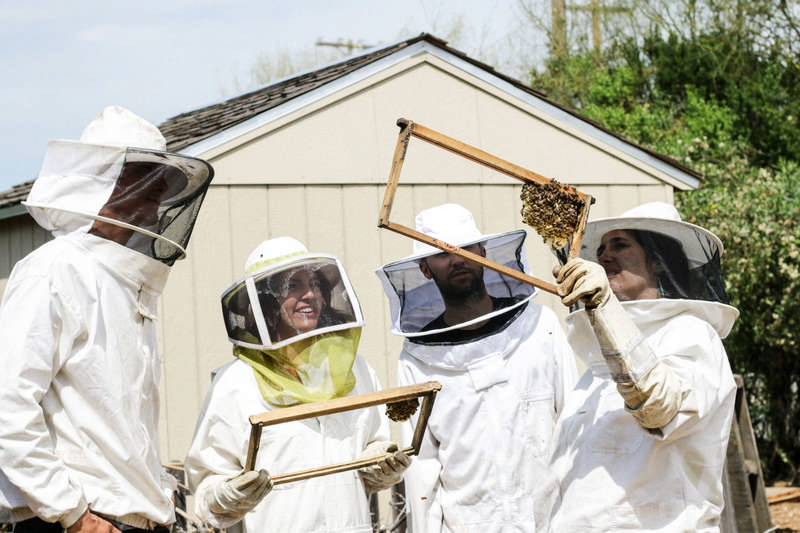 beekeepers looking at foundation