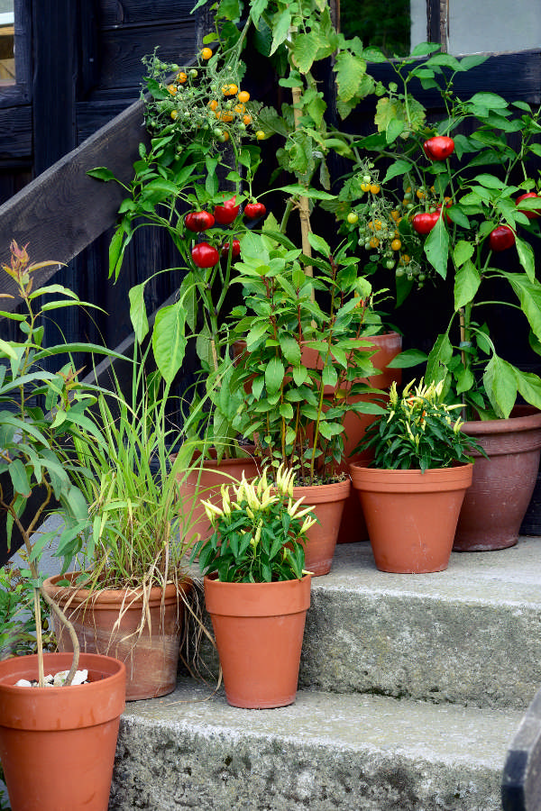 how to grow an easy container garden