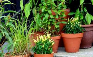 how to start an easy vegetable container garden
