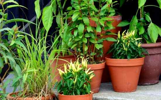 Read more about the article How to Start an Easy Vegetable Container Garden
