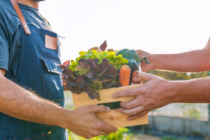 food security farmer