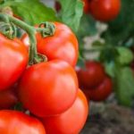10 Ways to Improve Food Security for Your Family