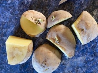 seed potatoes cut into pieces